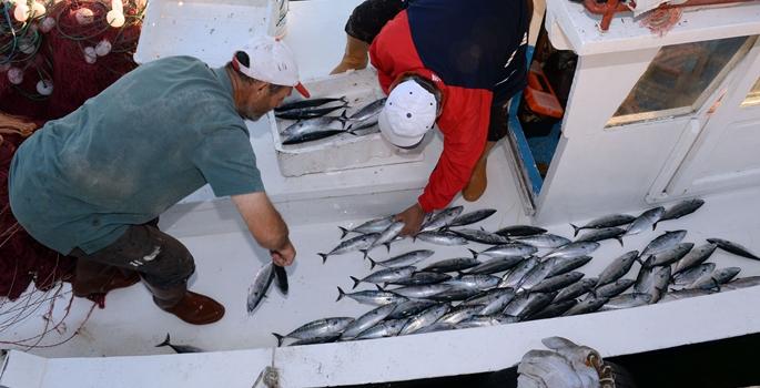 Trabzonlu balıkçıların yüzünü palamut güldürdü