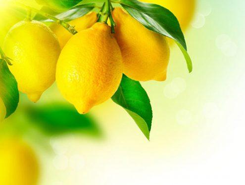 limon-kac-kalori