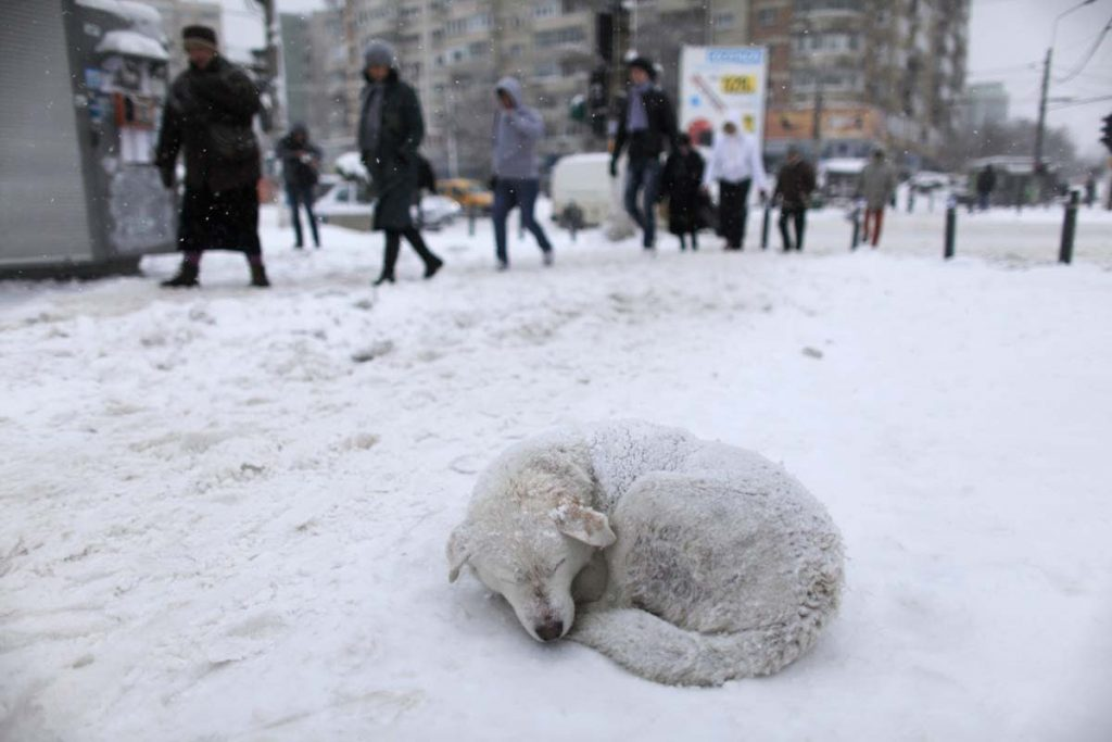 A stray dog sleeps in the snow as people pass by on a street in Bucharest January 26, 2012. Heavy snow and blizzards have swept across Romania over the past two days, not only causing chaotic traffic, blocking motorways and leaving hundreds stranded in snow, but also forcing the closure of the country's main Black Sea port. REUTERS/Radu Sigheti (ROMANIA - Tags: ENVIRONMENT ANIMALS TPX IMAGES OF THE DAY) ORG XMIT: RSS01
