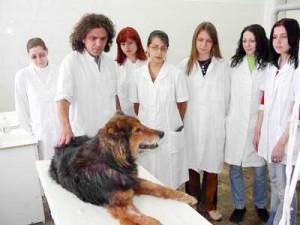 veterinerlik-meslegi
