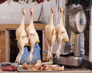 20090129004712!Chickens_in_market