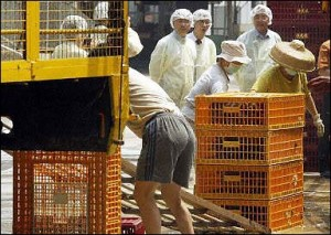 Health workers at the Cheung Sha Wan wholesale poultry market in Hong Kong.