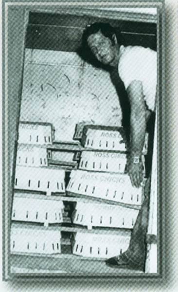 Osman Bor civciv dağıtımında