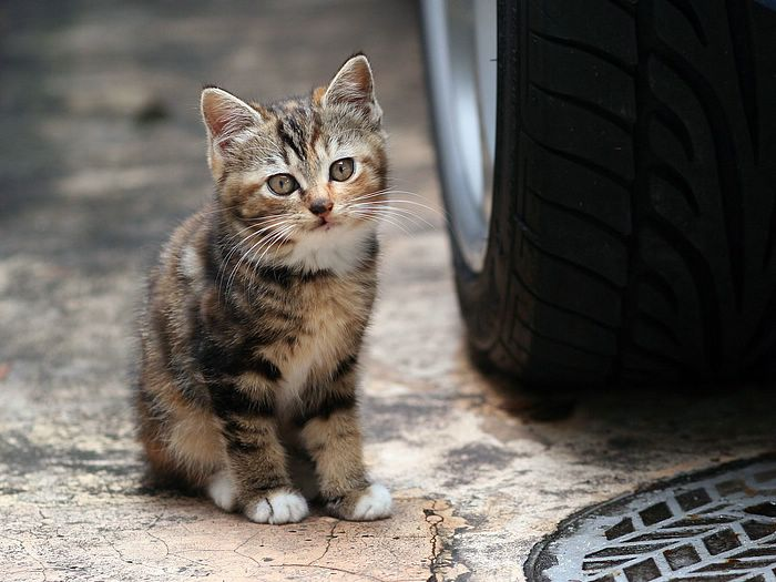 city_homeless_cat_kdn-002553-x