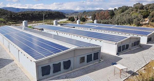 Tavuk çiftliklerinde elektrik üretilecek