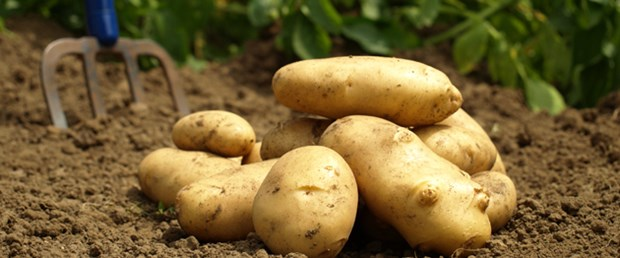 patates-fiyatlari-dusmeye-basladi-patatesin-kilosu-ne-kadar,5teCfyN8IUyJAwFw5ochcA