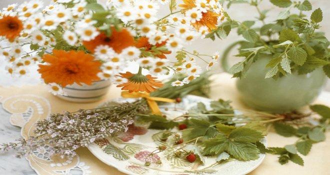 tibbi-ve-itri-bitkiler-merkezinin-strateji-ve-hedeflerinin-belirlenmesi-calistayi