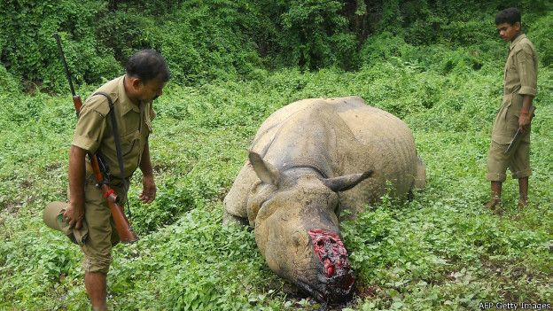 150714100204_wildlife_crime_2_624x351_afpgettyimages