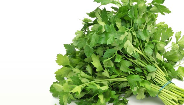 lettuce1343