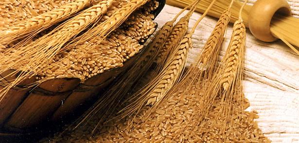 Rüyada-Buğday-Görmek