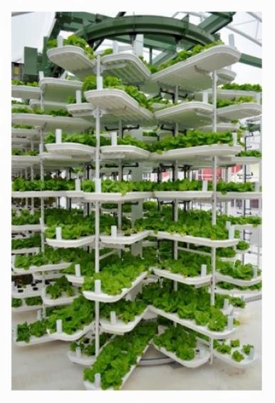 Vertical Farming 2