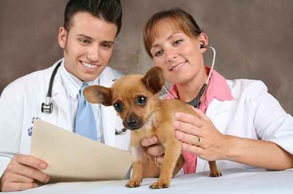veteriner-hekimlerin-calisma-alanlari-is-imkanlari
