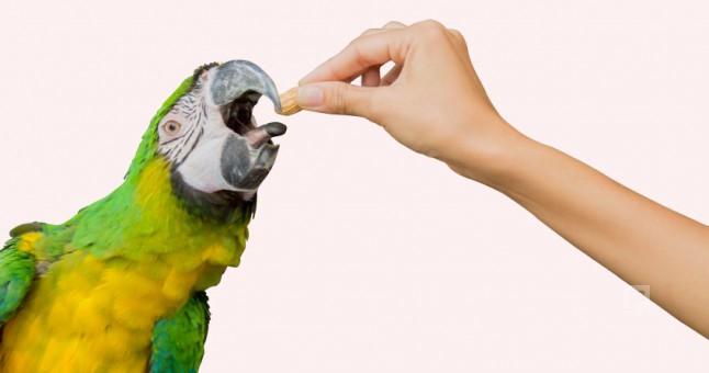 papagan-nasil-beslenir_646x340