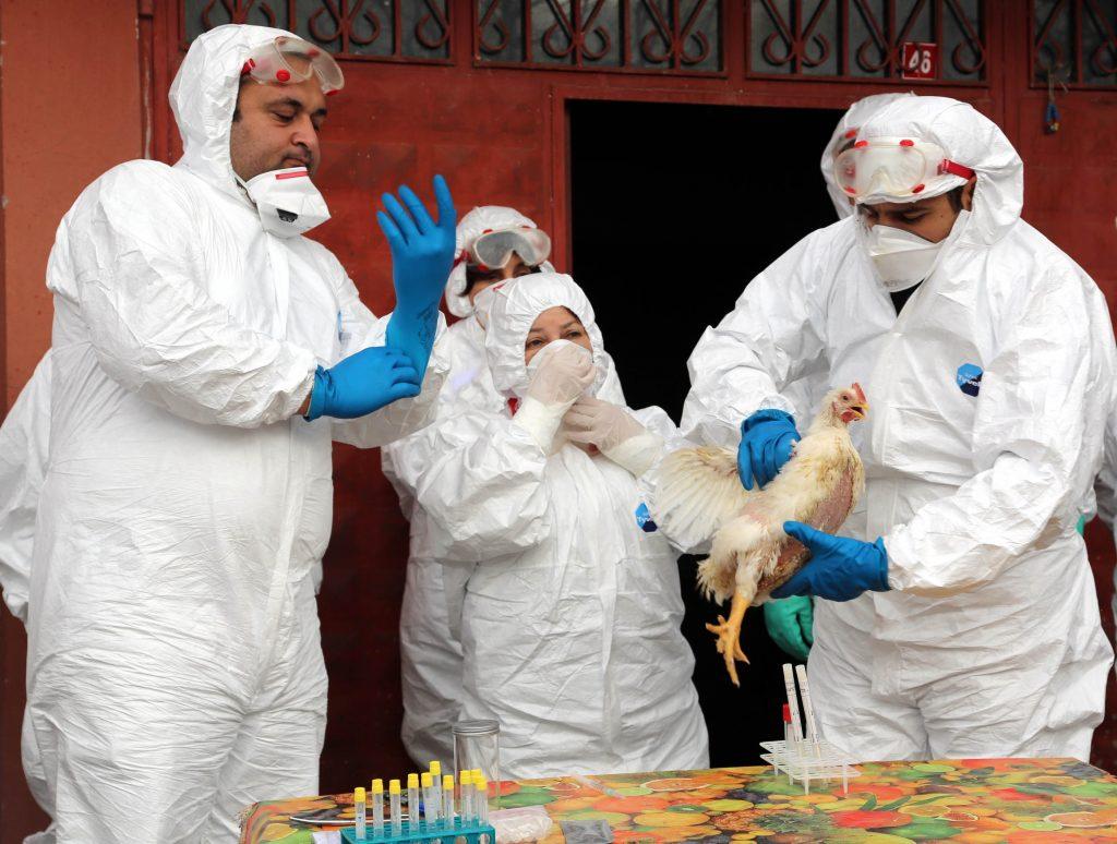 Bolu'da, Gıda ve Kontrol Genel Müdürlüğü gözetiminde kuş gribi tatbikatı yapıldı. (Mehmet Emin Gürbüz - Anadolu Ajansı)