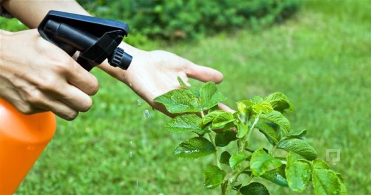 bitki koruma sınavi