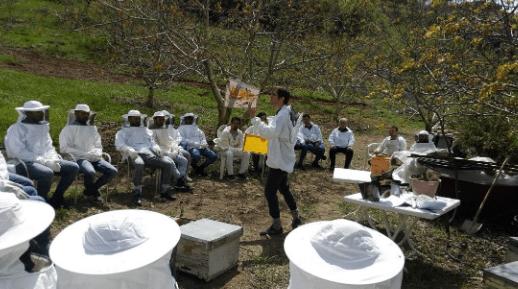 Arı Çalıştayı
